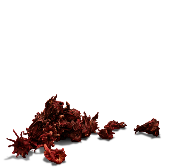 Background hibiscus